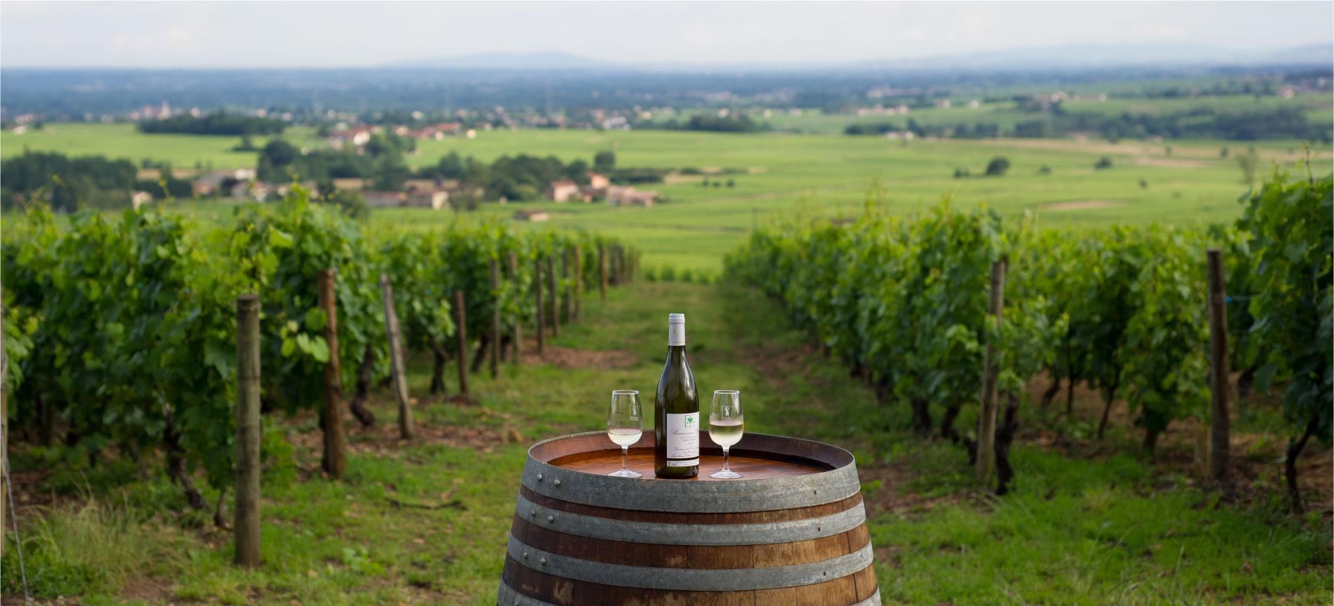 vignes-st-amour-domaine-hamet-spay